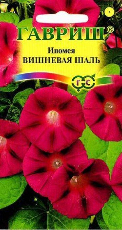 Какой цветок ипомея